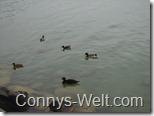 Connys-Welt.com