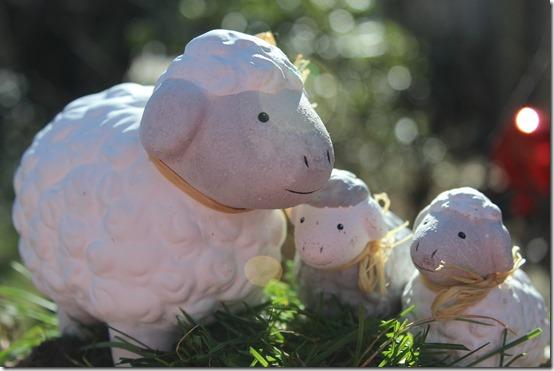 sheep-586374_1920