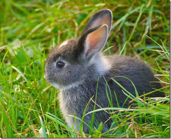 rabbit-947820_1920