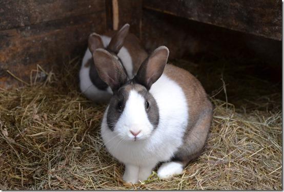rabbit-966648_1920